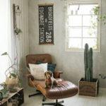 おしゃれな部屋作りに「サボテン」がおすすめ!観葉植物初心者向け